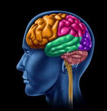Alimlər beyinə faydalı və zərərli təsirləri araşdırıblar