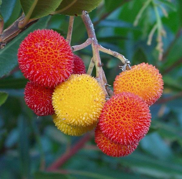 Dendrologiya İnstitutunda yeni növ ekzotik bitkilərin bioloji xüsusiyyətləri öyrənilir