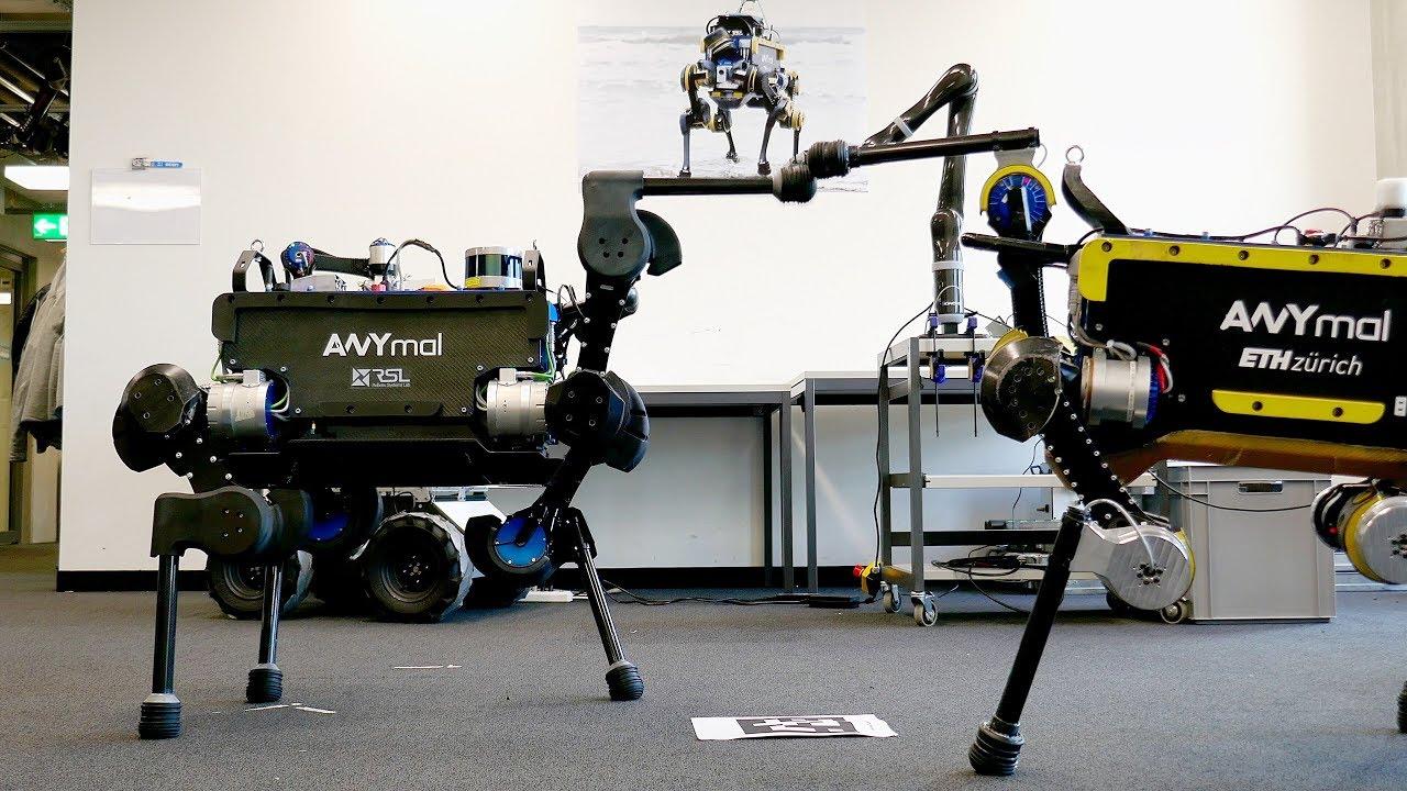 """""""ANYmal""""  robotun gələcəkdə xilasetmə əməliyyatlarında istifadəsi planlaşdırılır"""