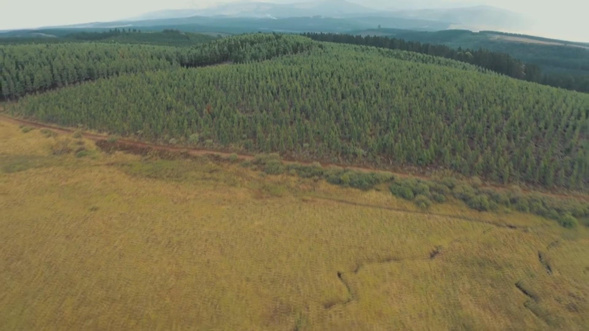 Böyük Britaniyada aparılan araşdırma:  Hər üç ağac növündən biri məhv ola bilər