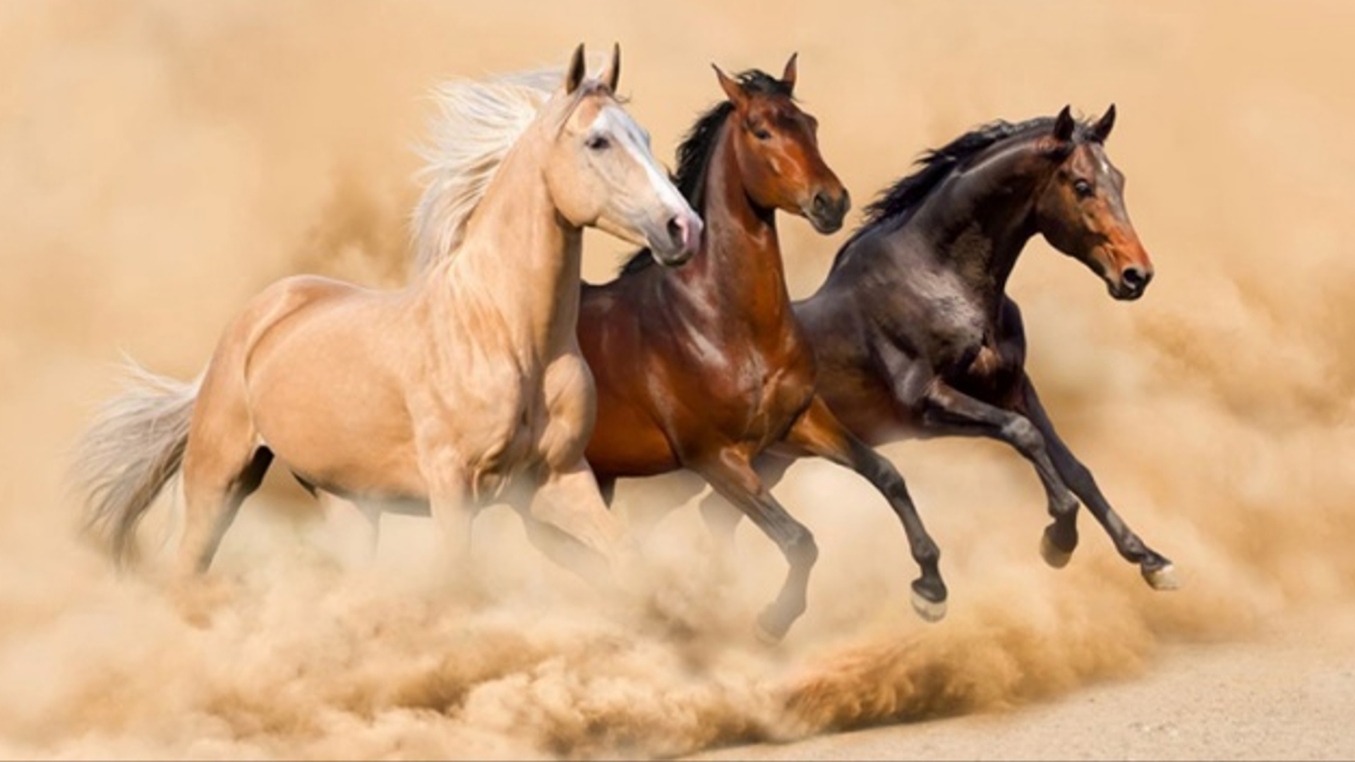 Atlar insanların əhvalını anlayır