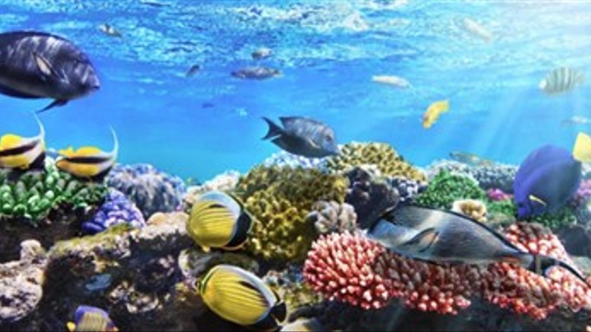 Okeanın ən dərin bölgəsində yaşayan  canlılar müşahidə olunub