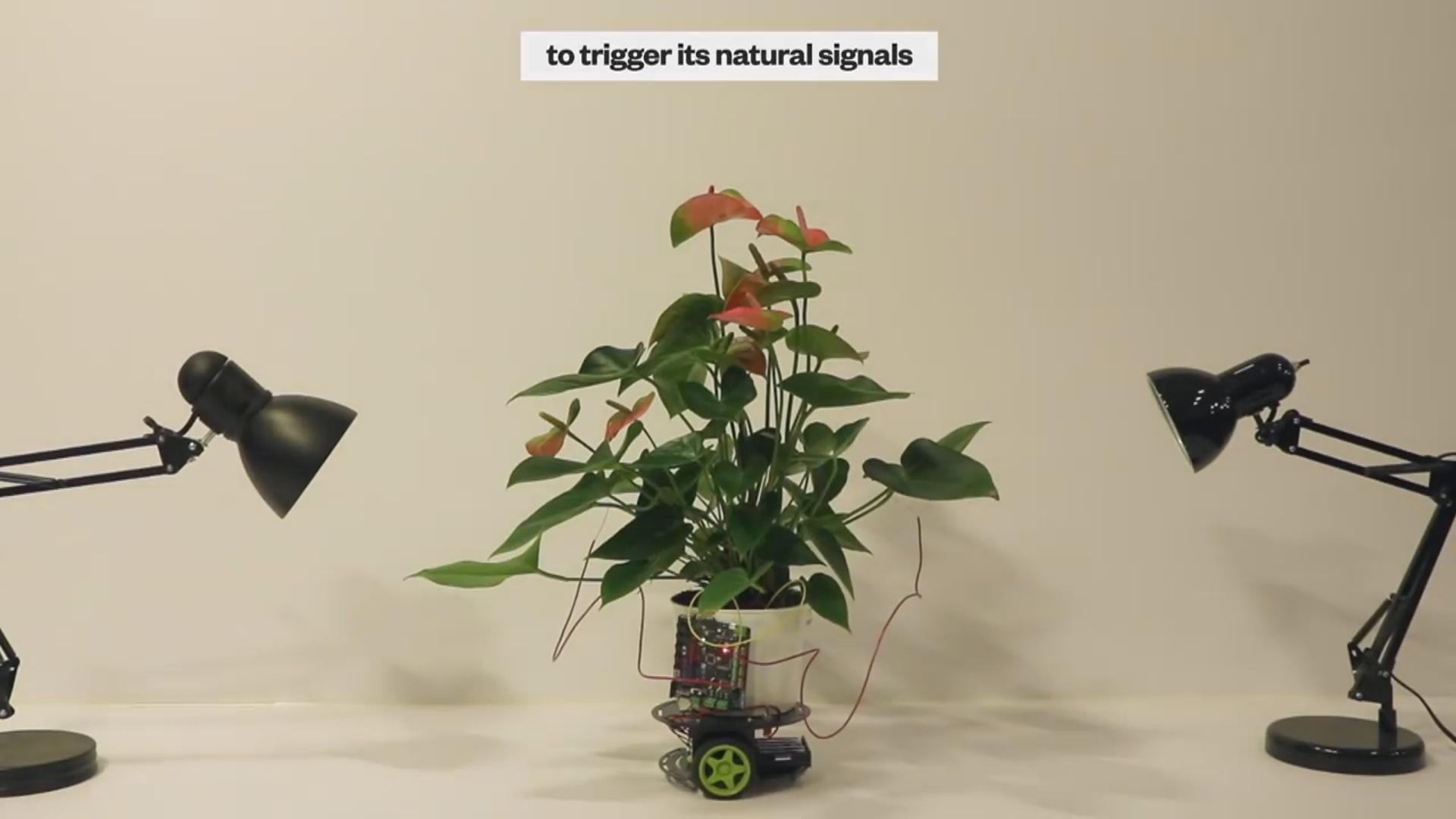 Bitkilərin inkişafını sürətləndirmək mümkün olacaq