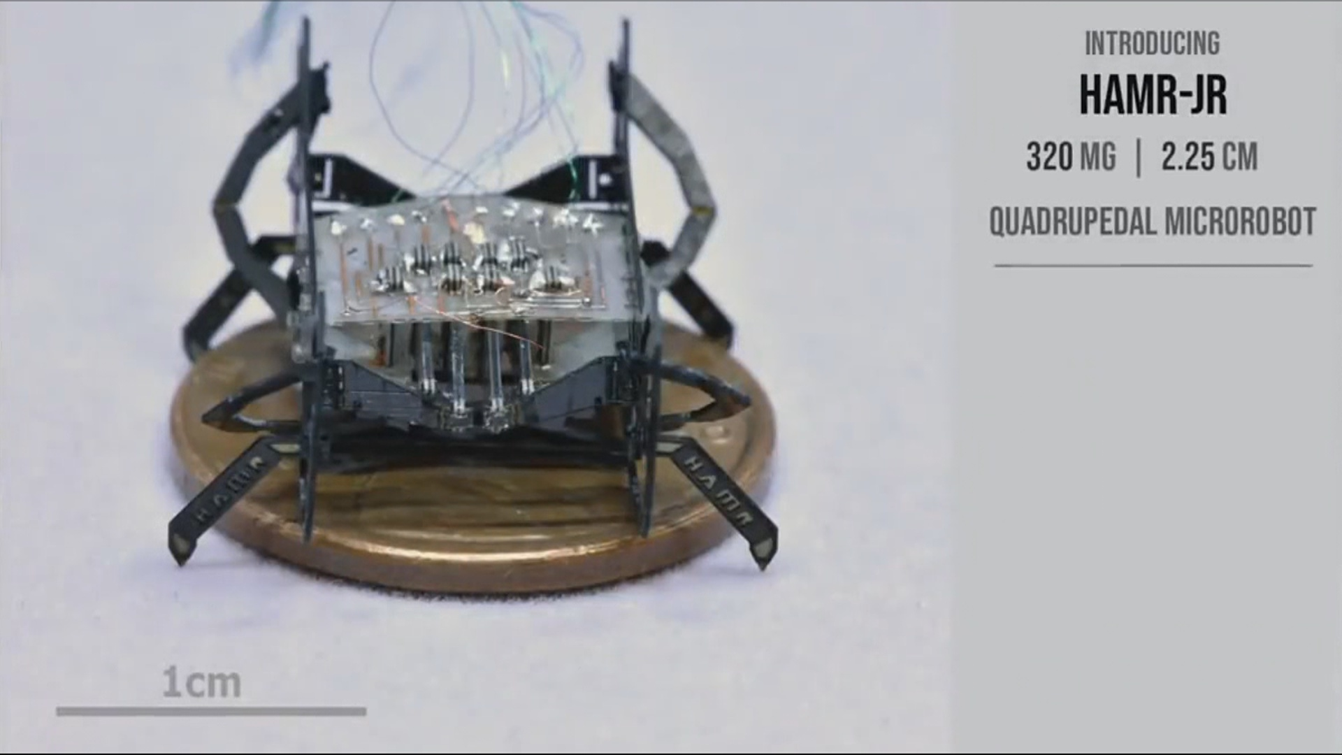 Ən kiçik böcək robotun yeni modeli hazırlanıb