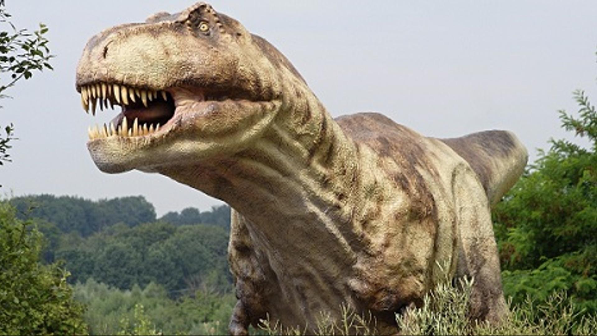 Dinozavrların əcdadının timsaha bənzədiyi aşkar olunub