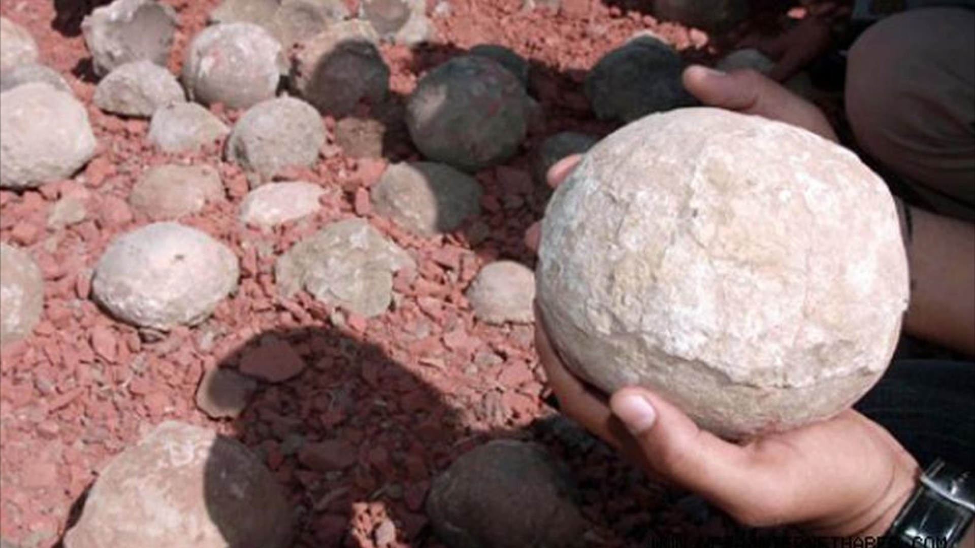 80 milyon illik dinozavr yumurtaları aşkar edilib