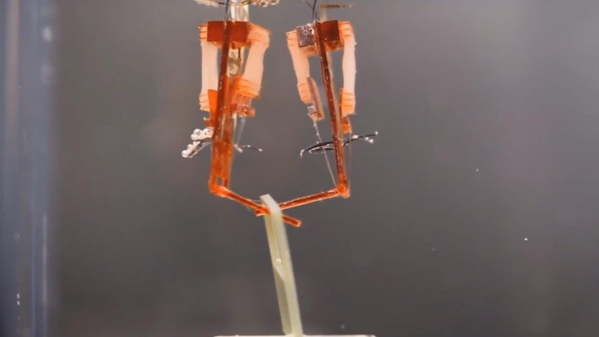 Əzələli robotlar 90 dərəcə bükülmək qabiliyyətinə malikdir