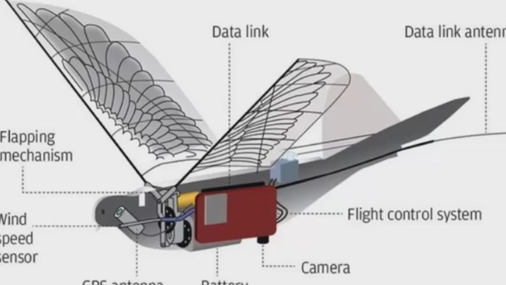 Göyərçin-dron radarlardan asanlıqla yayına bilir