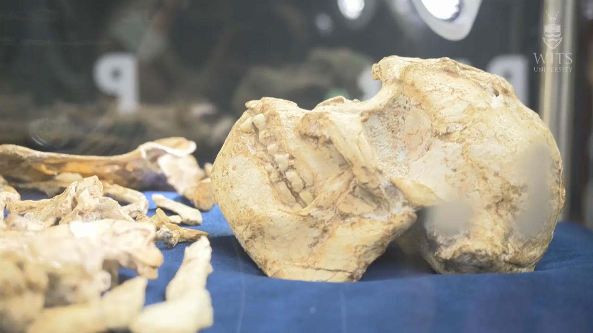 Dünyanın ən əskiksiz qədim insan qalığı tapılıb
