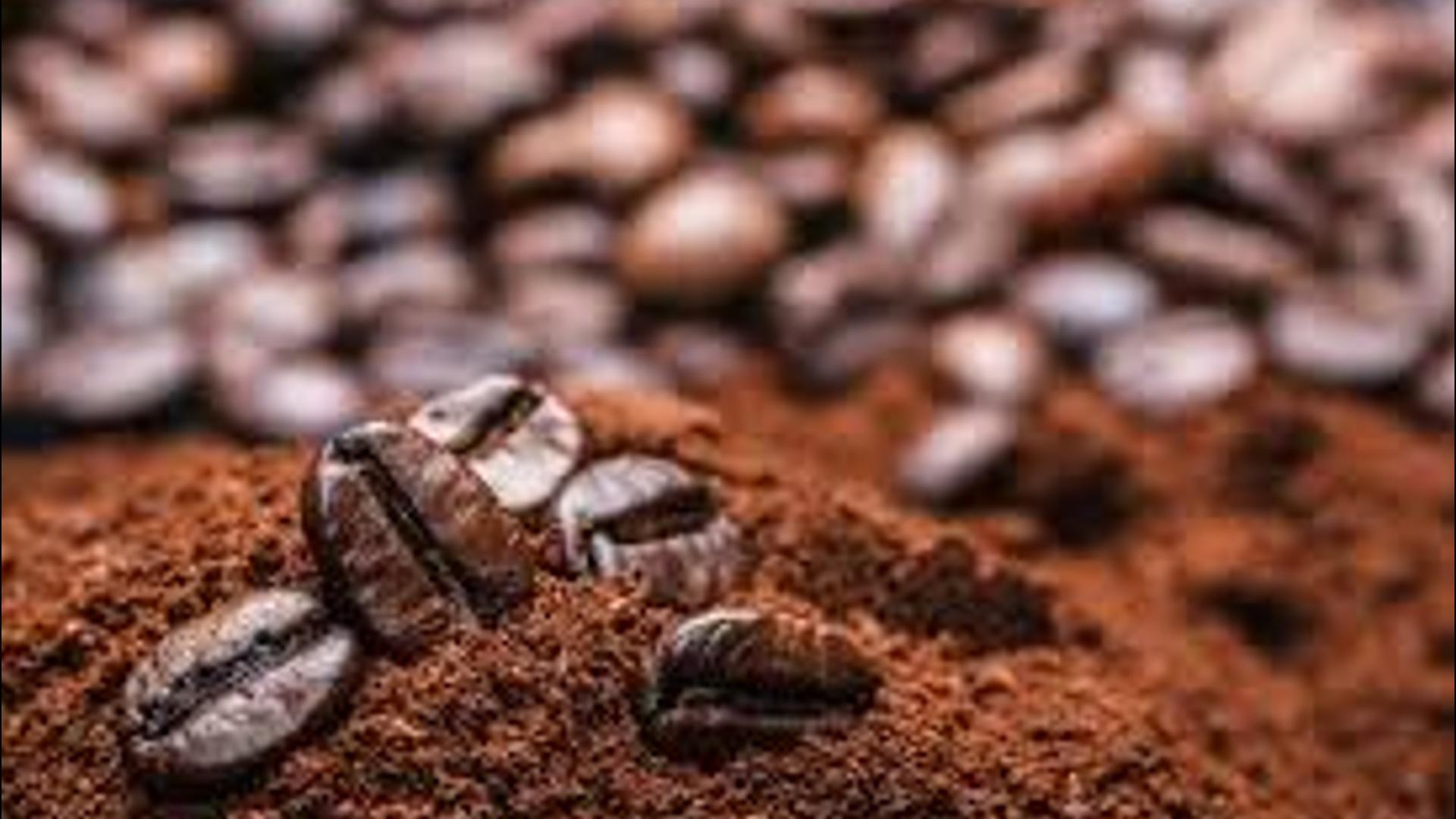 Kofe qalığından enerji istehsalında istifadə ediləcək