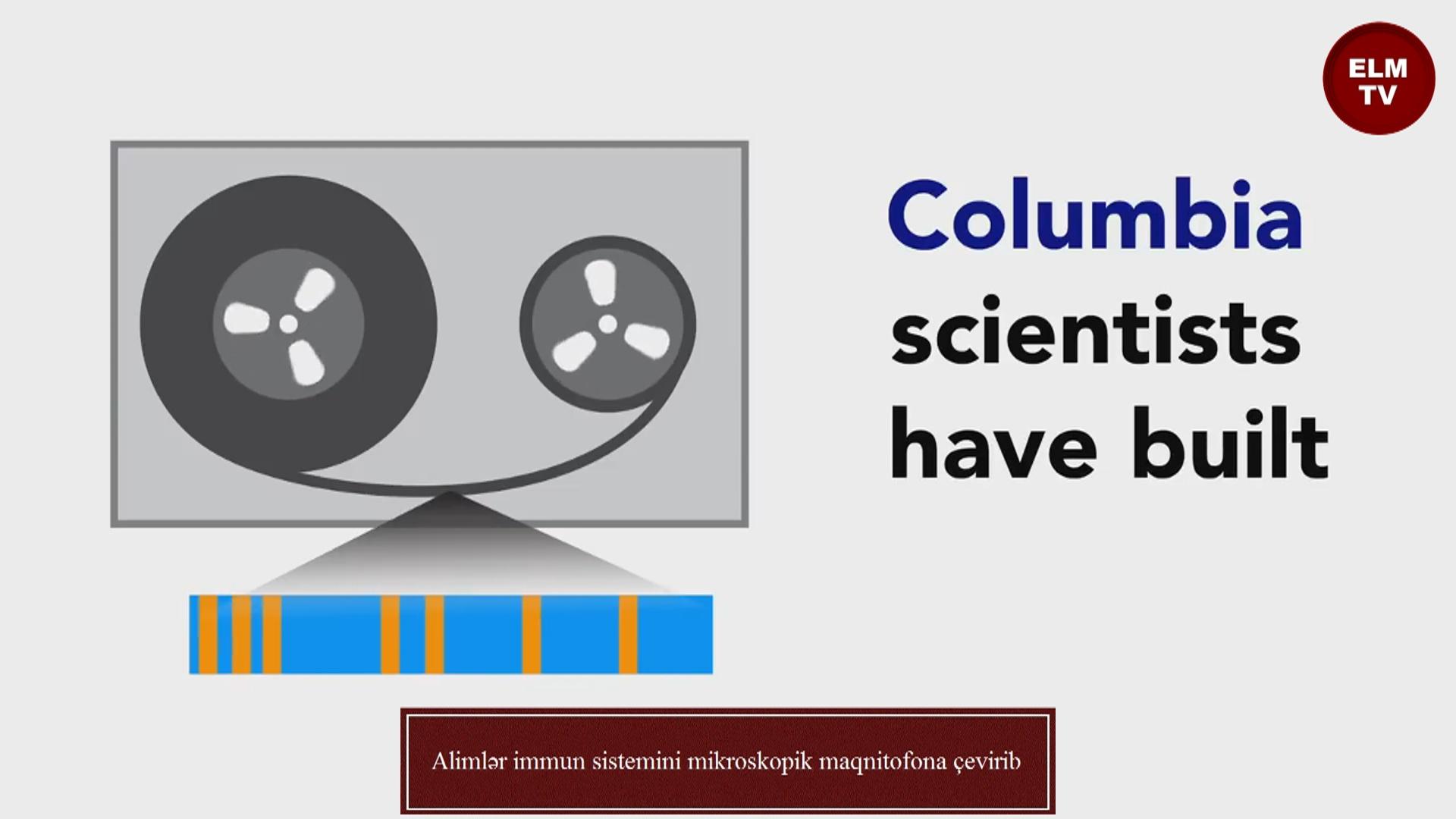 Alimlər immun sistemini mikroskopik maqnitofona çevirib