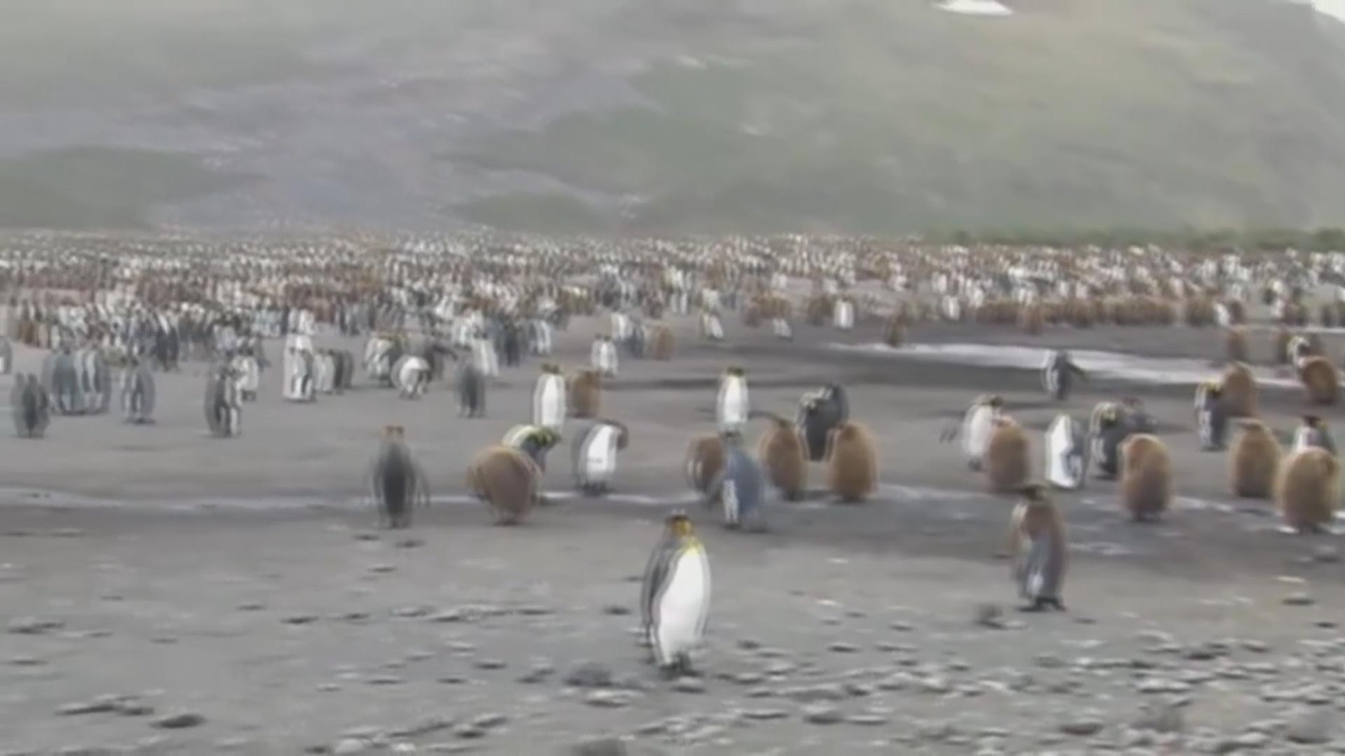 Alimlər milyonlarla pinqvinin olduğu ada aşkarlayıblar