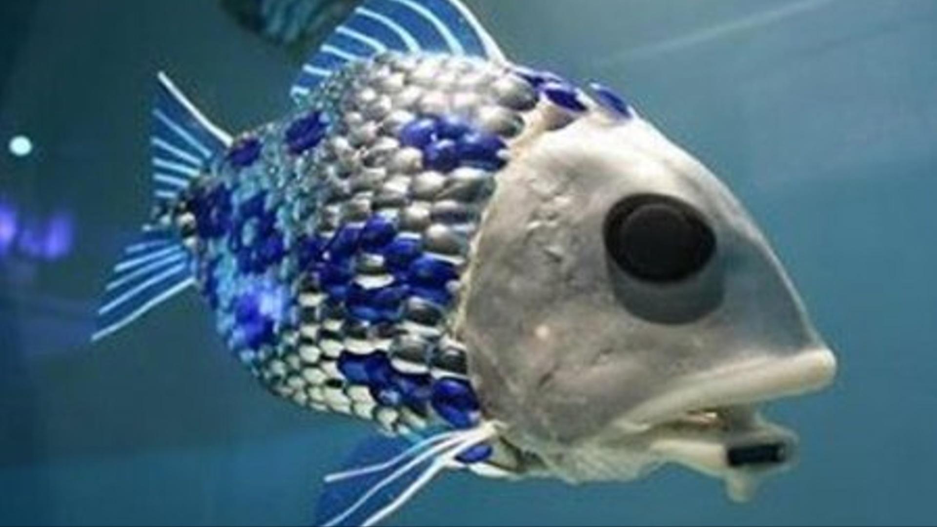 Robot balıq suyun keyfiyyətinə nəzarət edəcək