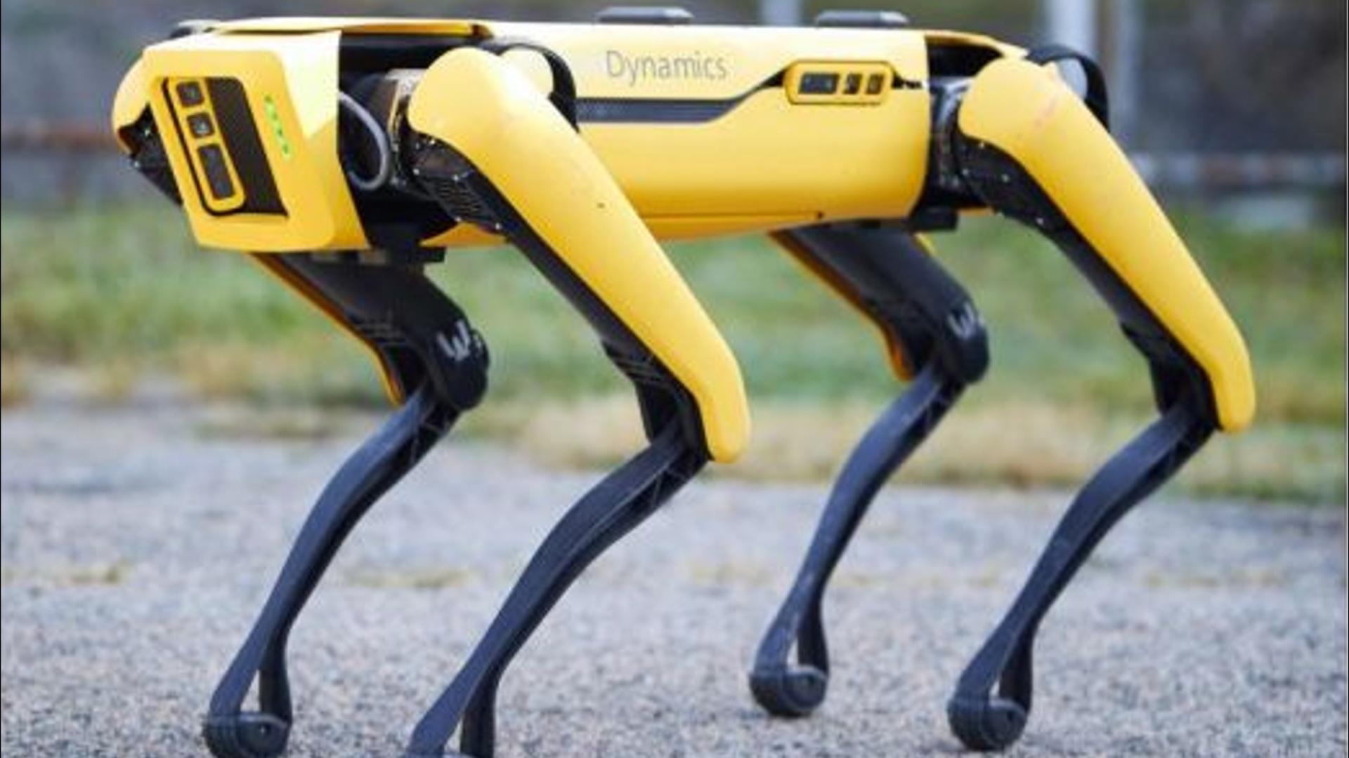 Spot robotunun satışına start verilib