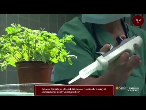 Alimlər bitkilərin akustik titrəmələr vasitəsilə ünsiyyət qurduqlarını müəyyənləşdiriblər