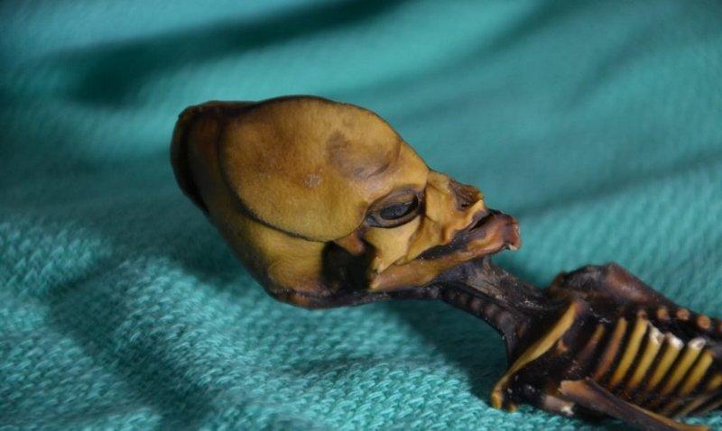 Yadplanetli olduğu iddia edilən skeletin sirri açılıb