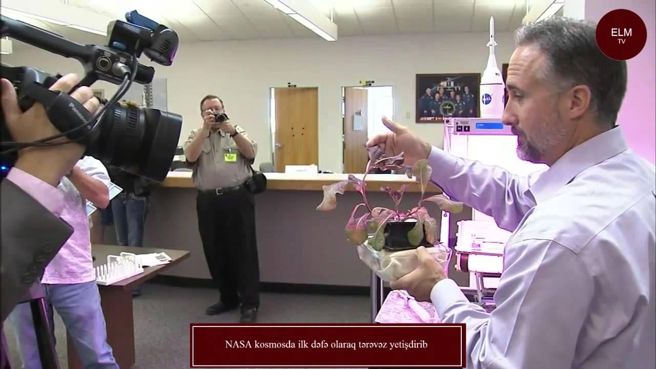 NASA kosmosda ilk dəfə olaraq tərəvəz yetişdirib