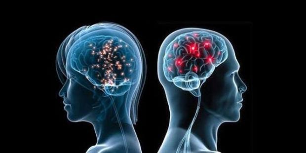 Alimlər beyində zəkanı inkişaf etdirən genləri araşdırıblar
